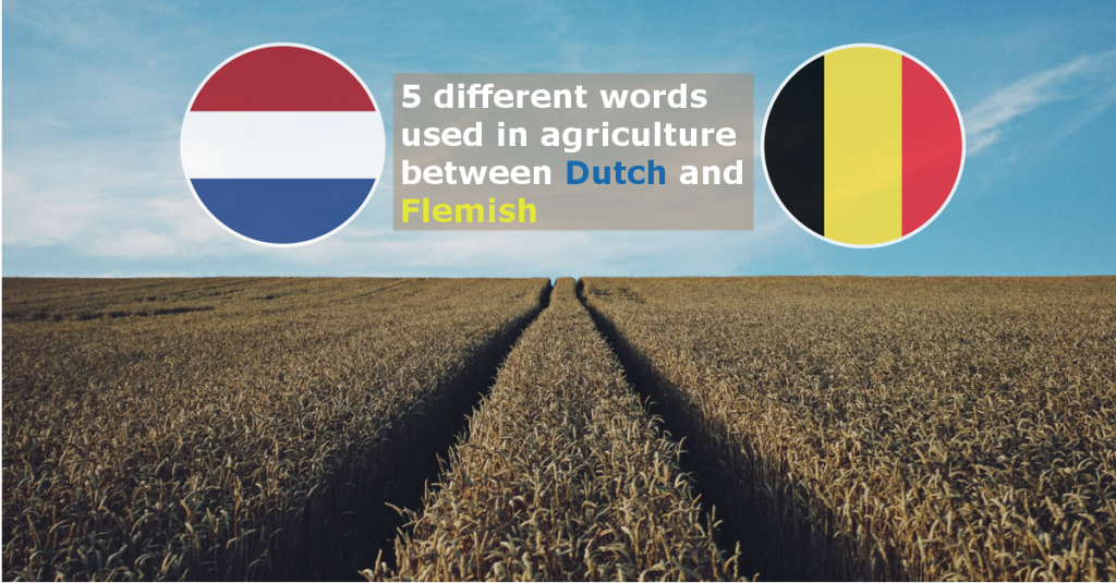Difference Dutch Flemish