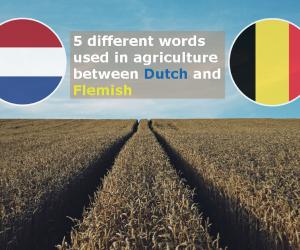 Article Home Difference Dutch Flemish
